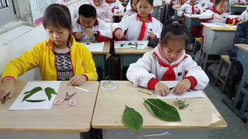 上学 剪贴画-树叶粘贴画 三年级数学综合实践活动方案